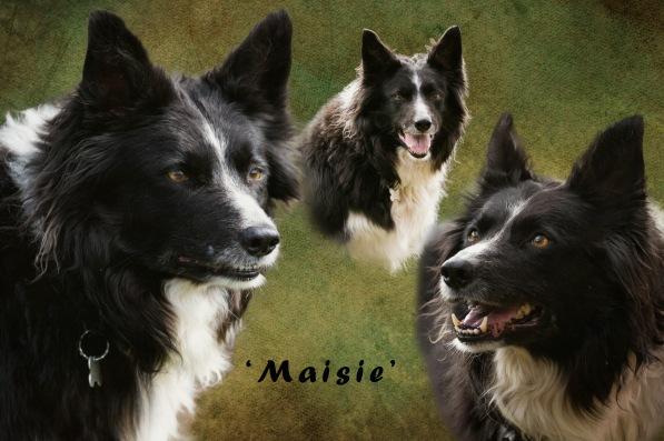 Maisie Montage